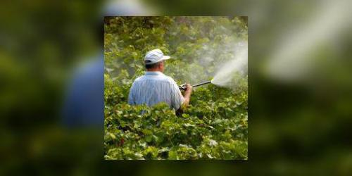 Pesticides et sante : quels risques ?