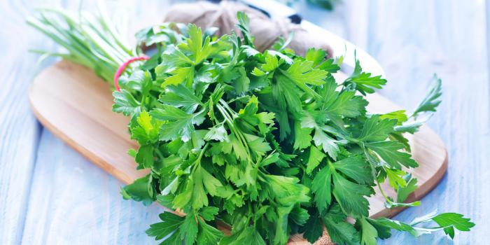 Parsley: a thousand health benefits of parsley,