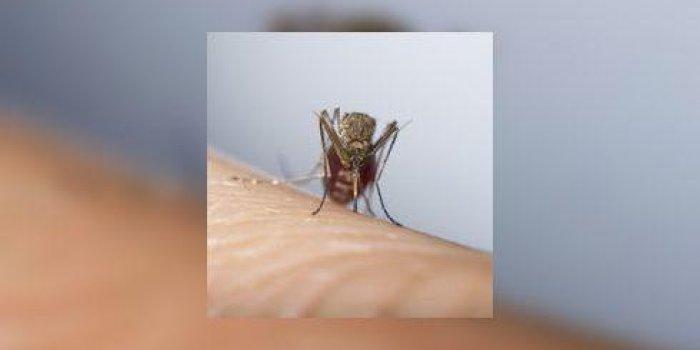 Maladies à transmission vectorielle (paludisme ...