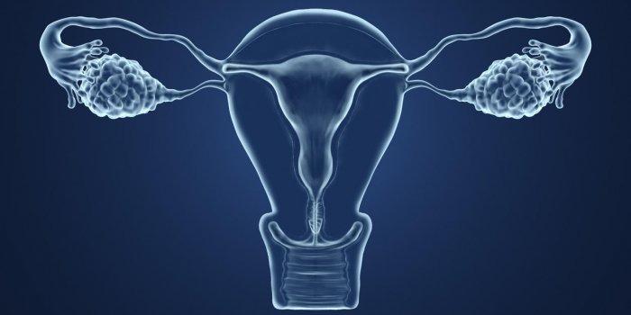Kyste ovarien : la douleur au bas-ventre est un signe d'alerte