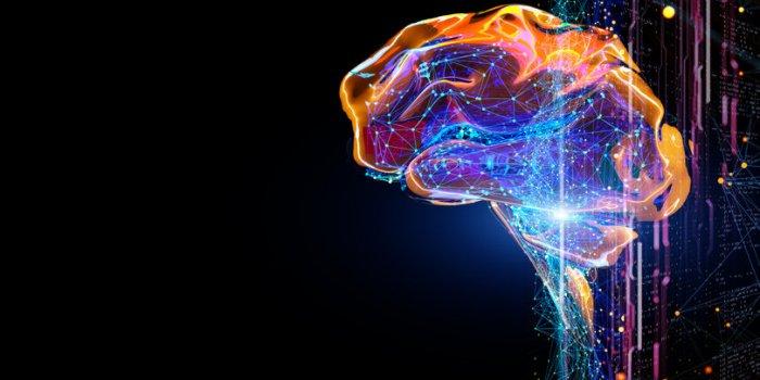 6 moyens de booster son cerveau, selon la science